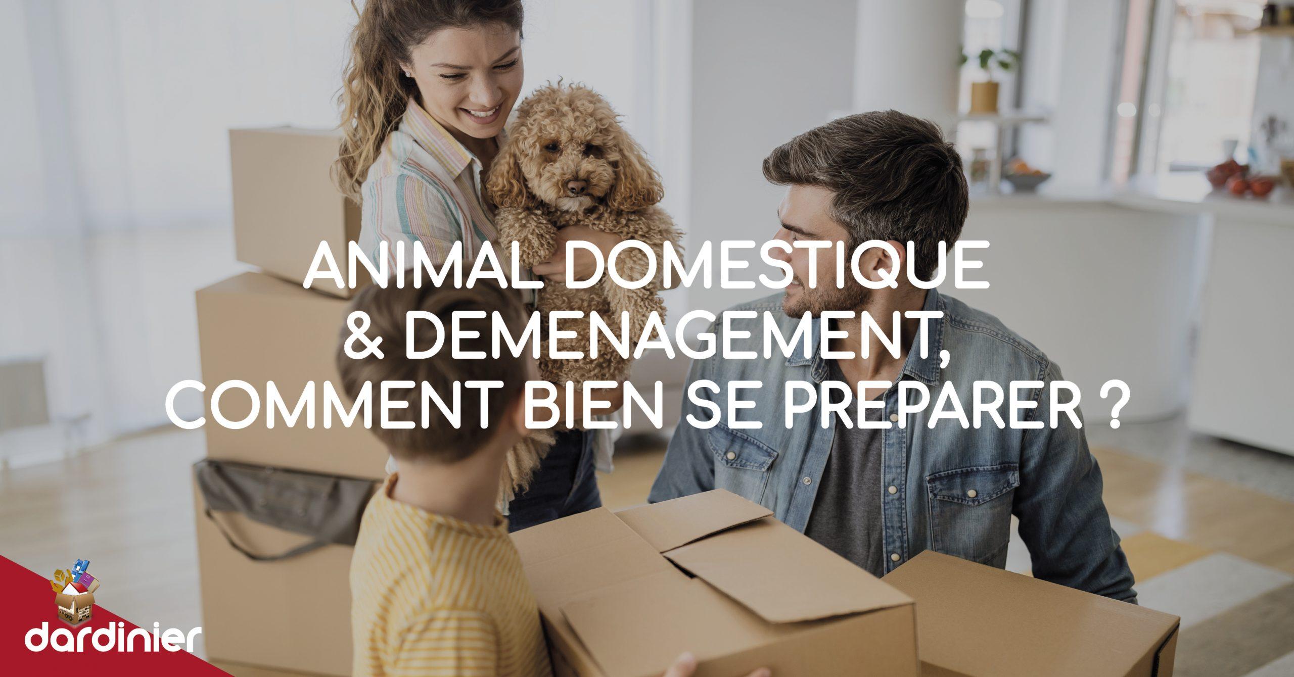 Animal domestique et déménagement, comment bien se préparer ?